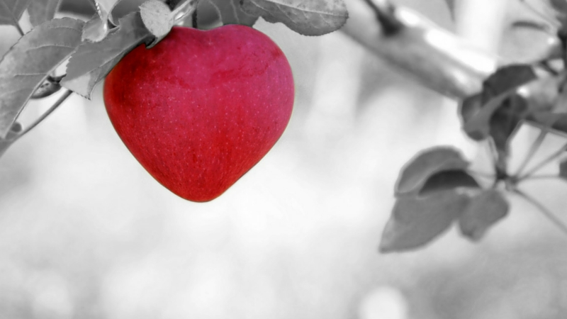 LNAP Saint Valentin