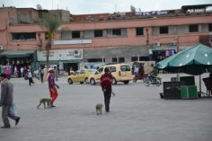 Marrakech. Voyage. Maroc. La Nantaise à Paris (2)